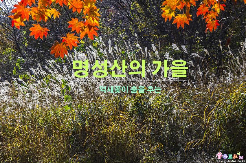 억새꽃이 춤을 추는 명성산의 가을
