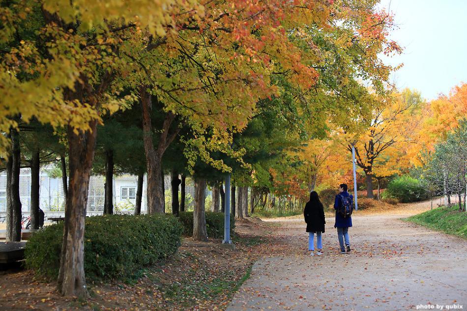 만추의 서울숲 단풍 | 서울 가볼만한곳, 단풍명소